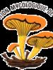 Exposition Mycologique AMT : 19, 20, 21 novembre à la Faculté de Pharmacie de Rangueil