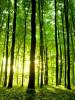 Projet de loi sur la biodiversité – Ph Martin (article de Joel Cossardeaux)