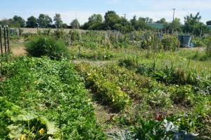 jardin en prunet