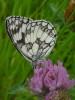Sortie inventaire de la biodiversité- 14 juin 2014