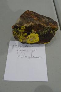 lichens2017-1211