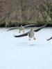 Prospection au Domaine des oiseaux de Mazères, 19 janvier 2020