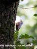 Compte-rendu sortie nature du bois du Bousquet: hier, aujourd'hui, demain ?- dimanche 27 septembre 2020