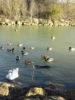 Proposition de sortie nature : Balade ornithologique au lac de Sainte-Foy-d'Aigrefeuille