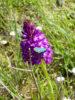 Sortie Orchidées du 8 mai sous un beau soleil