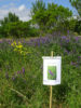 La labyrinthe de la biodiversité  : 50 plantes sauvages présentées dans la vallée de la Marcaissonne